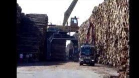 Najväčší drevosklad na svete