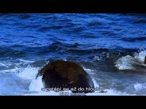 Oceánske oázy