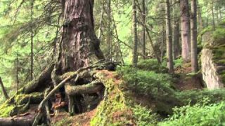 Strážca divočiny